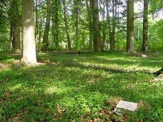 Urnenwahlgrab unter Bäumen - © Ihlefeldt, EKBO